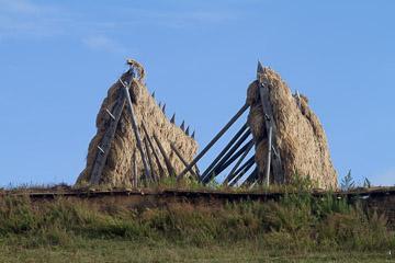 2010-0459.jpg